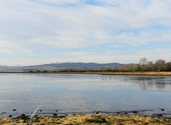 Partly Frozen, Beauly Firth, Milton of Redcastle, Black Isle, Jan 2017 (allanmaciver) Tags: redcasle milton black isle scotland frozen water beauly firth low view fannich mountains quiet still beauty allanmaciver