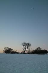 Und immer wieder der Mond (shortscale) Tags: schnee baum gebüsch mond feld wiese