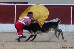 """Carnival """"bullfight"""" (JOAO DE BARROS) Tags: bullfight recortadores carnival action joão barros"""