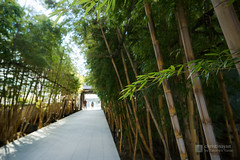 Entrance street of Baisoin Temple (梅窓院) (christinayan01) Tags: kuma kengo temple cemetery tokyo aoyama japan building bamboo street