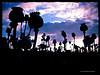 Papaver somniferum (60 MILÍMETROS) Tags: poppy amapola contraste atardecer campo papaver opio fondo nubes