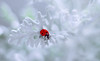 🐞❄ Lady in a Winter Wonderland 🐞❄ (ElenAndreeva) Tags: beauty color flower sun light summer bokeh cute snow dof insect canon garden top soft dream colorful holiday composition sweet focus bug best amazing nature winter macro art creative ledybug white smile forest round circle