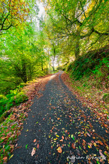 Autumn Way (Adrian Evans Photography) Tags: grass path lane landscape winter street outdoor fall wales countryside track autumn road tree uk adrianevans northwales trail sky paintingstyle fence leaves hdr impressionism