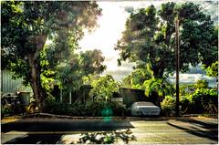 Magic light of Maui - 2016 (Patricia Colleen) Tags: maui lahaina magiclight tropicalfoliage hawaii