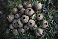 Death By Fungi (EBAUGHgraphy) Tags: fungi fungus spore 1835 canon eos 5d michigan nature pod sigma raw