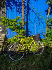 Yellow bicycle and a blue wall in Christiania in Copenhaven, Denmark (thorrisig) Tags: 482014 danmörk kaupmannahöfn kristjanía reiðhjól thorrisig thorfinnursigurgeirsson thorri þorrisig thorfinnur þorfinnur þorri þorfinnursigurgeirsson sigurgeirsson sigurgeirssonþorfinnur dorres copenhagen denmark christianshavn yellow byke blue wall bicycle