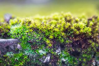 Mossy spring greetings :-)