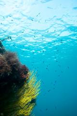 20150905-DSC_2903.jpg (d3_plus) Tags: sea sky fish beach japan scenery underwater diving snorkeling  shizuoka    apnea izu j4  waterproofcase    skindiving minamiizu       nikon1 hirizo  1030mm  nakagi 1  nikon1j4 1nikkorvr1030mmf3556pdzoom beachhirizo misakafishingport  1030mmpd nikonwpn3 wpn3
