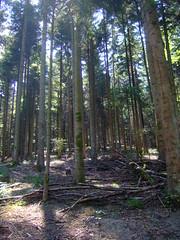 DSCF0828 (JohnSeb) Tags: trees tree forest germany deutschland rboles bosque arbre schwarzwald baum fort badenweiler johnseb bumen eurotour2012