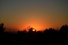 DSC_2315 (bfaling) Tags: trees columbus ohio red summer orange sun yard sunrise back glow neighborhood oh 2015