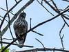 egle (raghphotography) Tags: wyanad raghphotography kerala forest canon ragh 520hs wayanadwildlifesanctuary