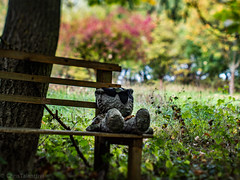freaky bench (ChrisTalentfrei) Tags: autumn oktober fall nature bench landscape toy 50mm pc october dorf village control teddy pentax herbst perspective freaky creepy tilt landschaft mainz ts omd bingen olypmus ockenheim