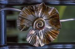 Yet another (Geza (aka Wilsing)) Tags: analog f80 scannedslide fujiprovia100f tamron28300mm metallicflower