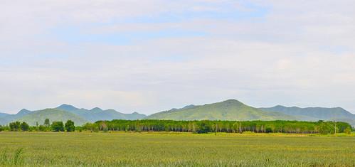 Thailand grassland at Hua-Hin Thailand