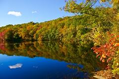 Autumn brilliance! (ineedathis, Keep on Ticking!) Tags: morning autumn trees newyork fall nature water colors clouds reflections pond huntington bluesky longisland coldspringharbor nikond750