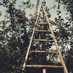 Neumanns Erntegarten #brandenburg #brandenburgblog #natur #wochenende #ausflug #apfelernte #selbsternte #erntehof #hofladen #bio #ernten #apfel #weintrauben #mittag #kse #fleischerei (Brandenburg Blog) Tags: natur bio ausflug brandenburg kse apfel mittag wochenende fleischerei weintrauben apfelernte hofladen ernten selbsternte brandenburgblog erntehof
