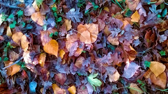 Autumn Rainbow (* landscape photographer *) Tags: italy nature colors europe flickr creative natura sa sasi vivi colori arcobaleno salvo lucania profumo 2015 respiro creazione landscapephotographer salvyitaly francavillainsinni