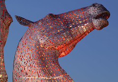 The Kelpies (David Unsworth (davidu)) Tags: thekelpies kelpies falkirk davidunsworth daviduair horse horses duke baron scotland iconic sculpture icon helix helixpark outdoor clydesdalehorseheads andyscott publicart horsesculpture forthandclydecanal parklandproject structuralsteel equinesculpture helixproject sculpturalskyline landmark landmarks mythicalwaterhorses statues kelpiesatnight