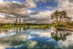 Reflections of Nature (Nejdet Duzen) Tags: trip travel reflection tree nature pool turkey cloudy türkiye izmir ağaç yansıma havuz turkei seyahat doğa bulutlu