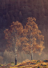Companions (colinbell.photography) Tags: