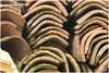 Dakpannen (HP011364) (Hetwie) Tags: forrest fotoworkshop bosanemoon frankrijk malviã¨res natuur dakpan nature lafougeraie landgoed auvergne bos hauteloire malvières