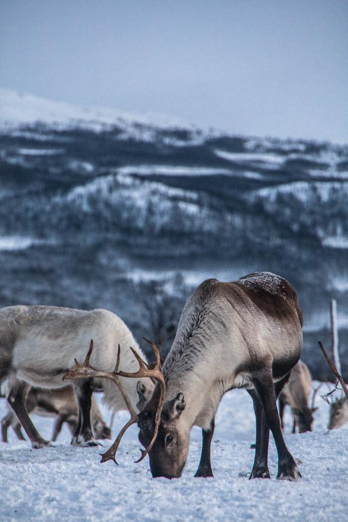 prime date norge Tromsø