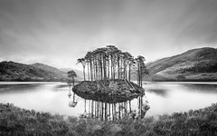 Potter Trees (twistednoodle) Tags: smugmug 2016 scotland kimberley flickr ilpoty2016
