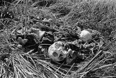 Photographer: Marilyn Silverstone (liberationwarbangladesh.org) Tags: atrocitycrimes biharipeople crâne extérieur exterior grayscale hindouisme hinduism human islam lawn mirpur moslem musulman paille pelouse skeleton skull squelette straw