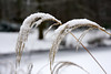 schneeschwer (Rosmarie Voegtli) Tags: winter duo tiergartenberlin berlintiergarten plants snow schnee neige neve