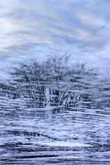 Dreams and Reality (Rh+) Tags: iowa pond ice icy reflection upsidedown blue sky water nikon d800
