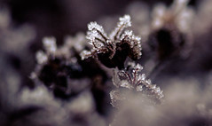 IMG_9998 (outsideartimages) Tags: frost fog winter foliage trees buds moss photography mono bare