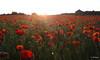 Primavera a L'Ortigós (mbermejo23) Tags: amapolas campo flores barraca pedraseca penedès naturaleza atardecer primavera paisaje