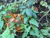 mushrooms/Point Lobos forest floor (LOLO Italiana) Tags: mushrooms forest nature pointlobos carmel ca