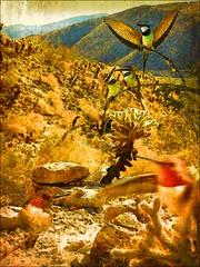 """Hummmm"" (lindyginn) Tags: ipad iphoto detailing with ipencil hummingbirds cacti mountains desert green brown ginn surreal rocks dirt dreamlike blur birds flight"