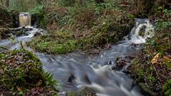 2017-01-17 Rivelin-7403.jpg (Elf Call) Tags: nikon rivelin river yorkshire water stream 18105 sheffield steppingstones waterfall d7200 blurred