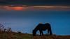 La potrilla (Carpetovetón) Tags: costa cantábrico agua amanecer cielo caballos caballo potro yegua mar marcantábrico montaña monte montecerredo sonynex5n cerredo castrourdiales cantabria españa