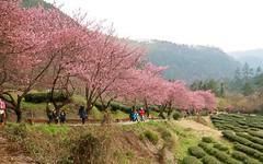 IMG_2957 (JBBTaipei) Tags: taiwan wulingfarm