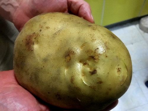 A BIG POTATO