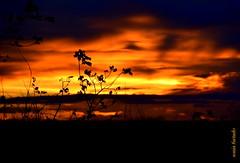 Quarta-sunset (sonia furtado) Tags: quartasunset sunset pds contraluz soniafurtado silhueta frenteafrente