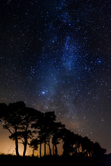 Dendro-Cosmology (Edward Wolohan) Tags: astronomy milkyway trees ireland wicklow pinetrees
