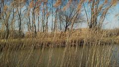 C'est le printemps (blogspfastatt (+4.000.000 views)) Tags: spring primavera frühling 春 весна wiosna bahar lente musimsemi ربيع