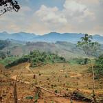 Road Through Clear-Cut, Lak Laos thumbnail