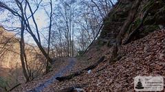 Wandern im Binger Wald