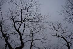樹汁 (momodie81) Tags: 馬武督 探索 森林 台灣 新竹 關西