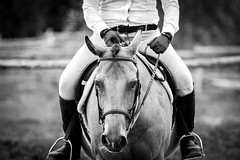 Horse Show (JustJamieLeigh) Tags: horse horses horseshow horsebackriding horseback equestrian equines equine english riding show englishriding canon60d canon 60d competition blackandwhite monochrome