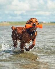 Can't wait to go to the beach again this weekend! • • • • • #campingwithdogs #hikingwithdogs #dogsonadventures #dogsthathike #adventuredog #thestatelyhound #houndandlife #backcountrypaws #doglove #hikingdogsofinstagram #excellent_dogs #adventureswithdogs (watson_the_adventure_dog) Tags: cant wait go beach again this weekend • campingwithdogs hikingwithdogs dogsonadventures dogsthathike adventuredog thestatelyhound houndandlife backcountrypaws doglove hikingdogsofinstagram excellentdogs adventureswithdogs topdogphoto heelergram hikingdog animaladdicts traildog ireland bestwoof campingcollective visualsgang wanderireland instaireland inspireland irishpassion irelandgram campingculture stayandwander