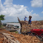 Kokosnusstransport im Mekong Delta