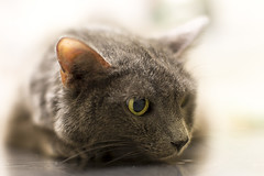 Sadie at the Vet (pointnshoot) Tags: sadie notmycat canonef50mmf12lusm