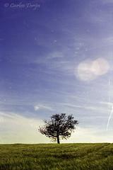 Study of loneliness (Carlos Torija) Tags: blue sky tree green film field clouds landscape arbol loneliness view wheat relaxing paisaje scratches calm cielo nubes árbol flare campo fields soledad nube flares reflejos trigo airelibre serenidad sembrado arañazos carlostorija