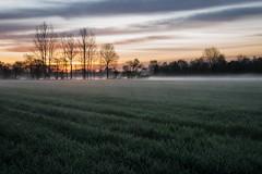 Morgens im Brook (webpinsel) Tags: nebel feld brook tau landschaft bäume sonnenaufgang morgensonne kälte halternamsee sythen